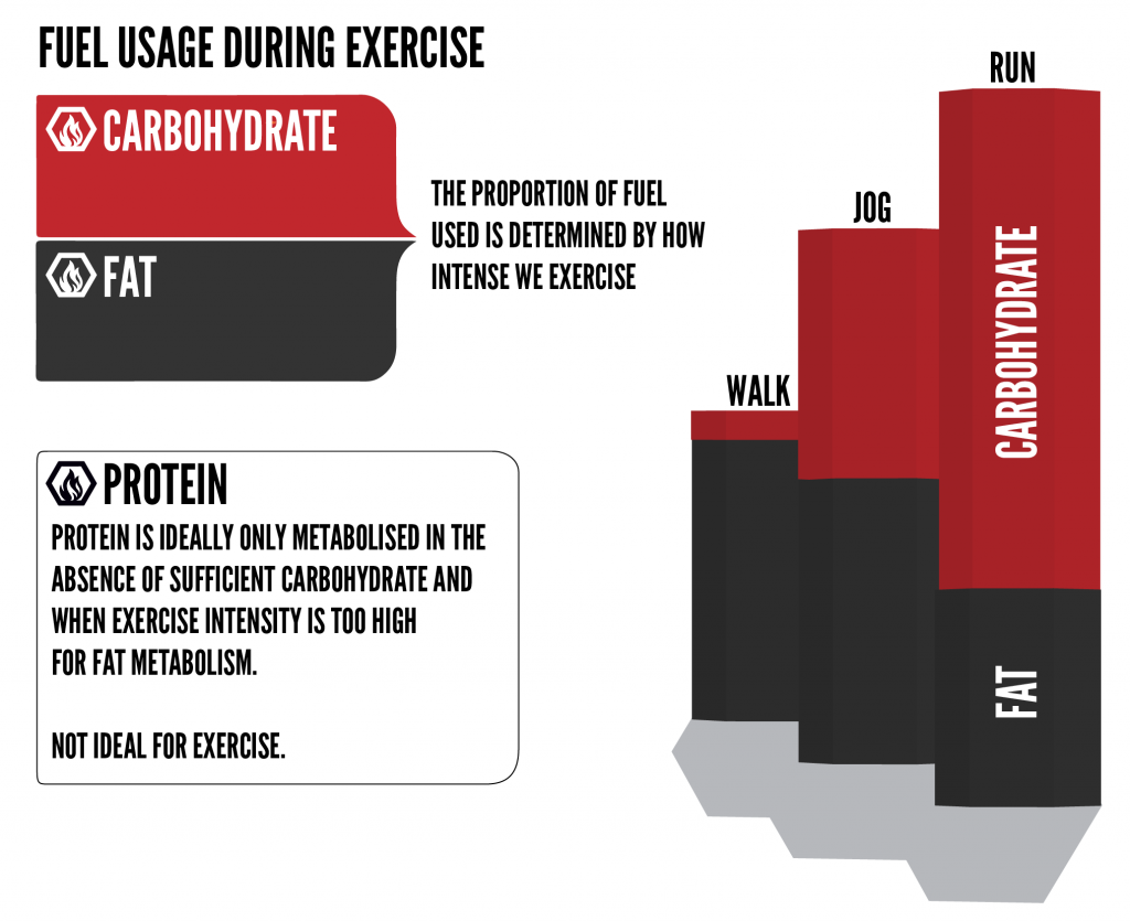 exercise nutrition - fuel usage